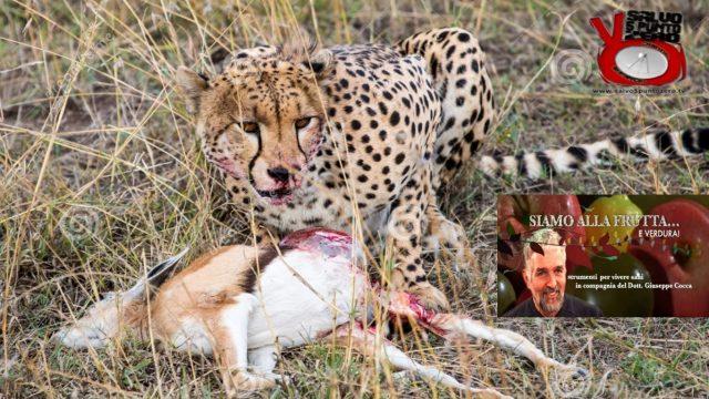 Il leone è un erbivoro! Siamo alla frutta…e verdura. Con il Dottor Giuseppe Cocca. 32a Puntata. 20/06/2017.