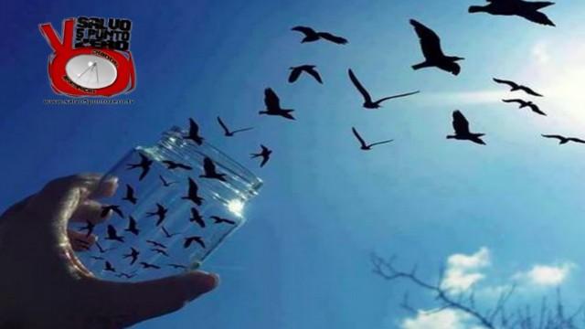 Ci stiamo liberando. Basta non fermarsi! Tg moneta 09/12/2015