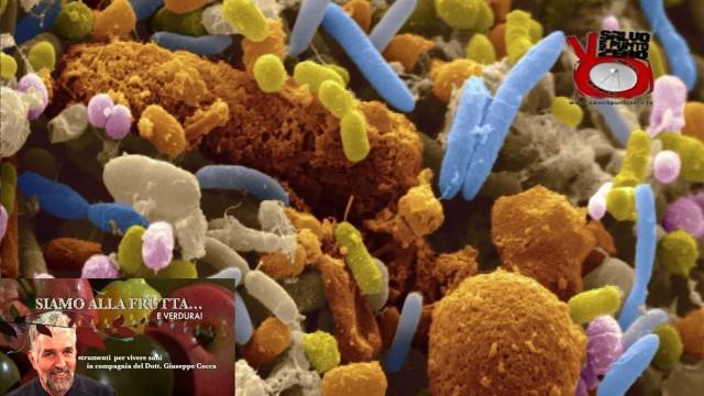 Il microbiota ci dice cosa mangiare! Siamo alla frutta…e verdura con il Dott. Giuseppe Cocca. 11a Puntata. 10/01/2017